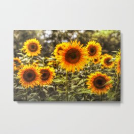 Sunflowers With Canvas Texture Metal Print
