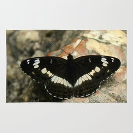 Butterfly on a Rock Rug