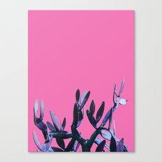 cactus2 Canvas Print