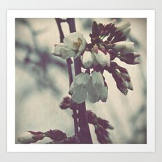 Weeping White Blossoms {2} Art Print