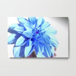 Dahlia in Blue Metal Print