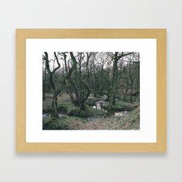 Woodland Stream Framed Art Print