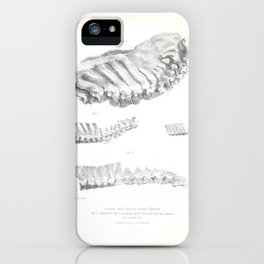 The Zoology of the Voyage of H.M.S. Beagle 1840 - Fossil Mammalia - Various Dorsal Vertebrae iPhone Case