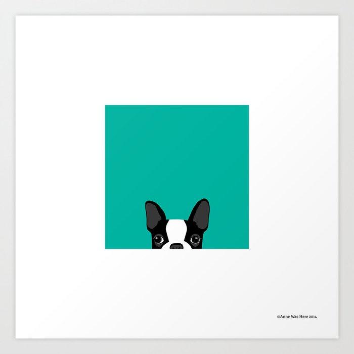 Boston Terrier Peek - Black on Teal Kunstdrucke