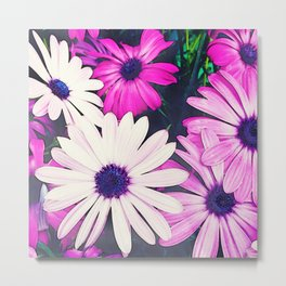 251 - Pink and White Flowers Metal Print