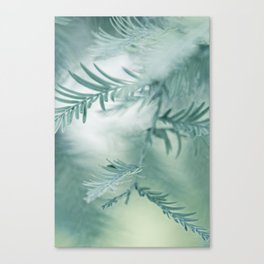 feathery leaves Canvas Print