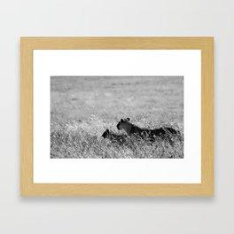 Lion in the Grass Framed Art Print