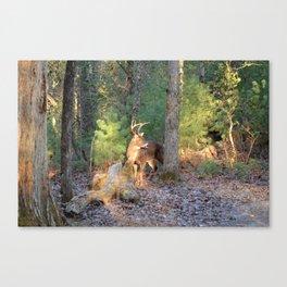 Deer Buck Cades Cove, TN Canvas Print
