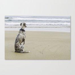 A whippet on a beach Canvas Print