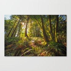 Redwood Regional Canvas Print