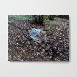Leaf floating in the air Metal Print