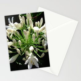 Close up view of a white Agapanthus in full bloom Stationery Cards