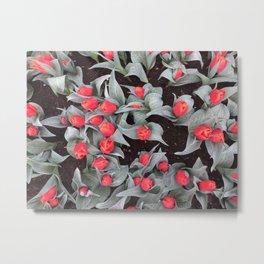 Keukenhof Red 1 Metal Print