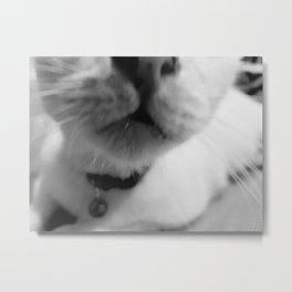 Nosey Kitty Metal Print