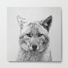Coyote - Black & White Metal Print