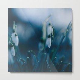 Snowdrops. Metal Print