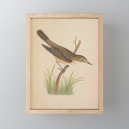 Vintage Print - A History of the Birds of Europe (1859) - Marsh Warbler Framed Mini Art Print