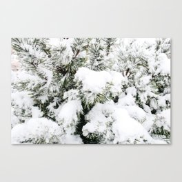 Pine Needles in the Snow Canvas Print
