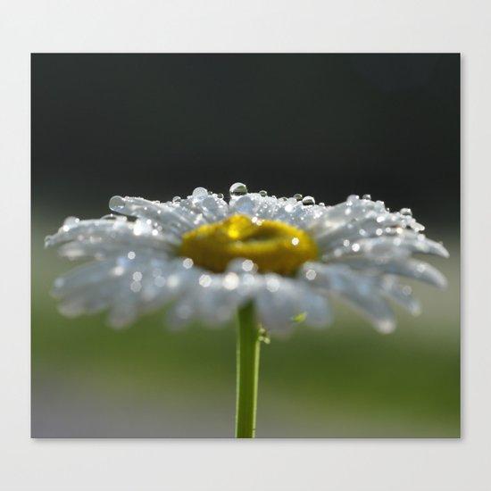 Sparkling Daisy Canvas Print