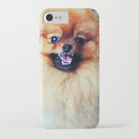 pomeranian iPhone & iPod Cases featuring POMERANIAN PHOTOGRAPH by Allyson Johnson