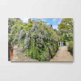 Mylor Walk - Wisteria Metal Print