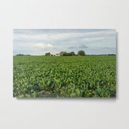 Frisian Farm, Marrum (Ferwerderadeel, The Netherlands) Metal Print