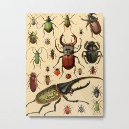 Popular History of Animals Beetles Vintage Scientific Illustration Educational Diagrams Metal Print