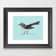 Willy Wagtail Framed Art Print