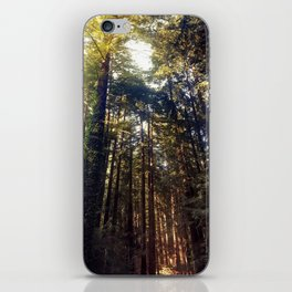Listen to the Redwoods iPhone Skin