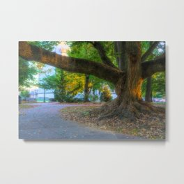Allentown West Park Path And Tree Metal Print