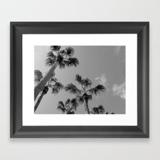 Palm Tress, Fuerteventura. Framed Art Print