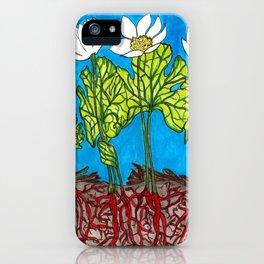 Bloodroots - Sanguinaria canadensis iPhone Case