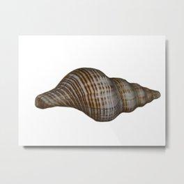 Seashell Metal Print