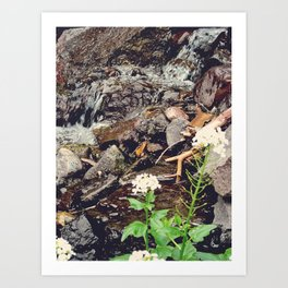Colorado, rocks, flowers Art Print