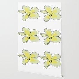 Frangipani Plumeria Flower Wallpaper
