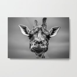 Black and White Giraffe Metal Print