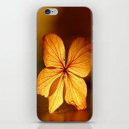 Fragile Hydrangea Flower iPhone Skin
