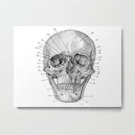 Anatomical Skull Metal Print