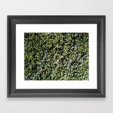 moss texture Framed Art Print