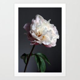 Soft pink peony Art Print