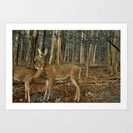 Deer in the Forest of Ardennes Art Print