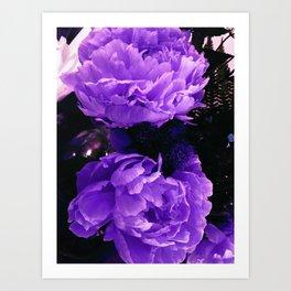 Peony Ultra Violet Art Print