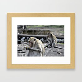 Feasting Monkeys Framed Art Print
