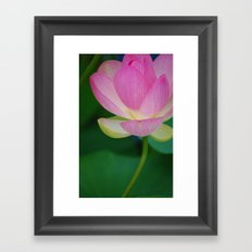 Lotus Blossom Flower 30 Framed Art Print