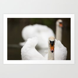 1046336 Mute Swan Art Print