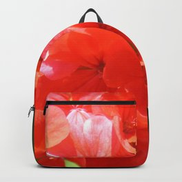 Zonal Geranium Pelargonium hortorum Backpack