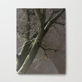 Fading Into The Winter's Light Metal Print