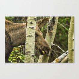 Hiding in Plain Sight - Moose Calf Canvas Print
