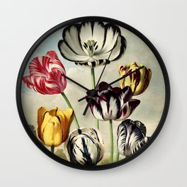 Tulips : Temple of Flora of New Illustration of the Sexual System Wall Clock