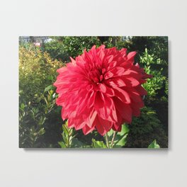 Blooming Just For You Metal Print
